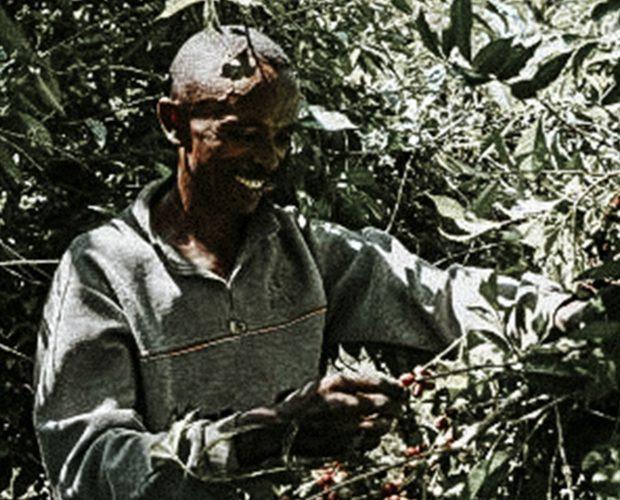 jonas-reindl-coffee-roasters-vienna-origin-ethiopia-beriti-tore-1-crop