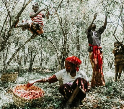 jonas-reindl-coffee-roasters-vienna-origin-ethiopia-beriti-tore-3