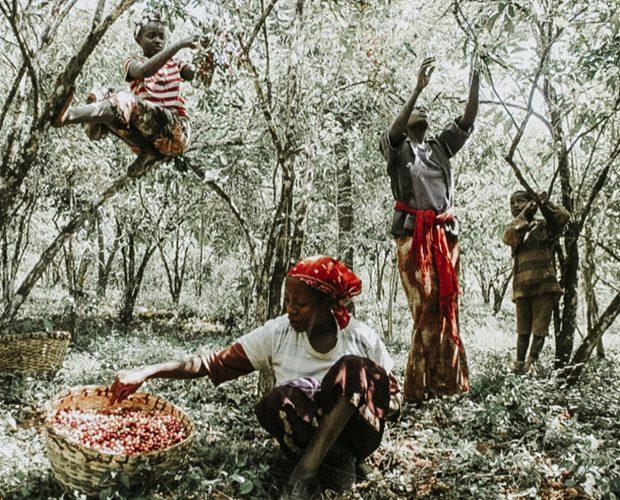 jonas-reindl-coffee-roasters-vienna-origin-ethiopia-beriti-tore-3-crop