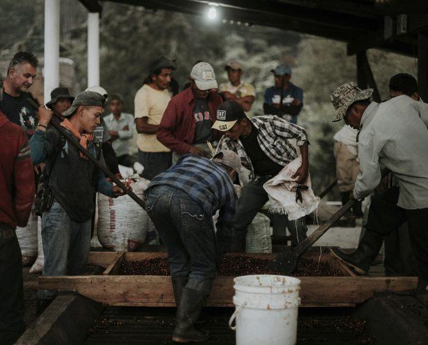jonas-reindl-coffee-roasters-vienna-origin-guatemala-finca-la-bella-3