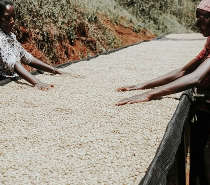 jonas-reindl-coffee-roasters-vienna-origin-kenya-ngutu-rwaikamba-5