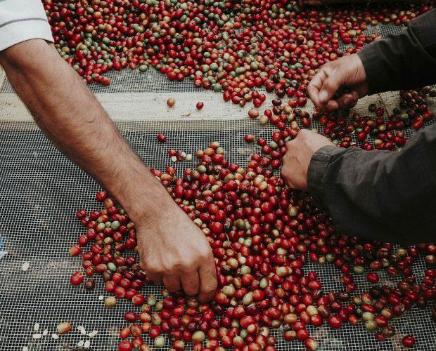 jonas-reindl-coffee-roasters-vienna-origin-nicaragua-finca-los-alpes-3