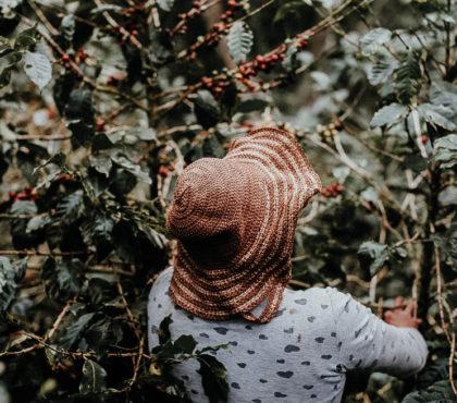 jonas-reindl-coffee-roasters-origin-ethiopia-banko-gotete