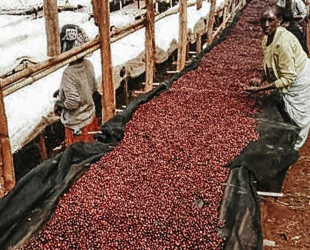 jonas-reindl-coffee-roasters-vienna-origin-ethiopia-banko-gotete-pb-2