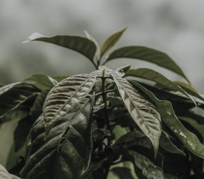 jonas-reindl-coffee-roasters-vienna-origin-el-salvador-chalate-pequenos-1