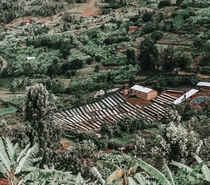 jonas-reindl-coffee-roasters-vienna-origin-rwanda-bumbogo-1
