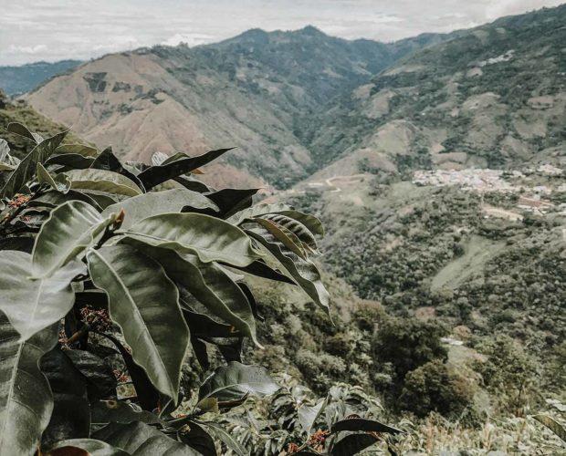 jonas-reindl-coffee-roasters-vienna-origin-peru-cajamarca-2