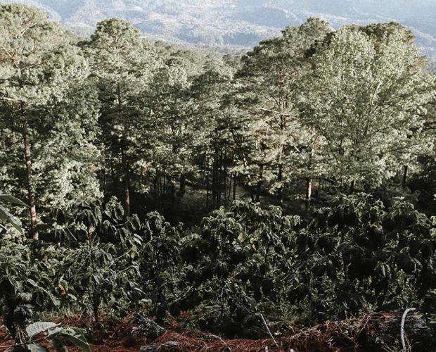 jonas-reindl-coffee-roasters-vienna-origin-honduras-norma-iris-fiallos-2