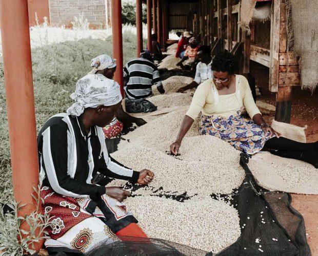 jonas-reindl-coffee-roasters-vienna-origin-guatemala-kichawir-2