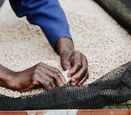 jonas-reindl-coffee-roasters-vienna-origin-kenya-kichawir-3