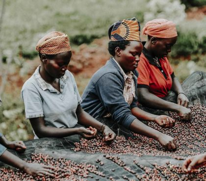 jonas-reindl-coffee-roasters-vienna-origin-rwanda-bumbogo-1.2