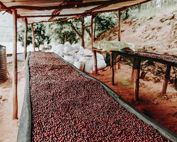 jonas-reindl-coffee-roasters-vienna-origin-rwanda-bumbogo-2.2
