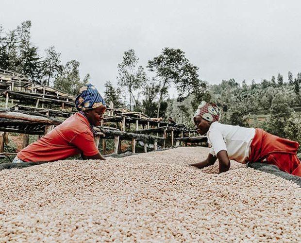 jonas-reindl-coffee-roasters-vienna-origin-rwanda-bumbogo-3.2