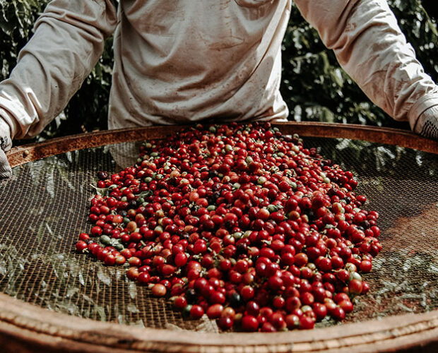jonas-reindl-coffee-roasters-brazil-4-web