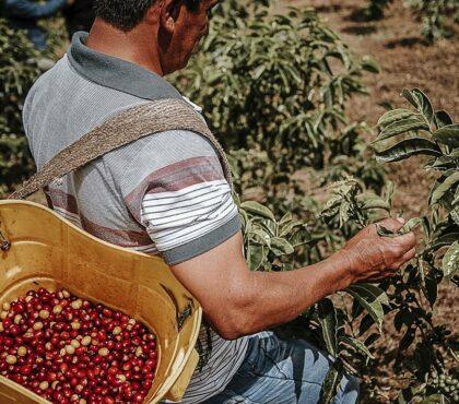 jonas-reindl-coffee-roasters-vienna-origin-colombia-finca-el-paraiso-1